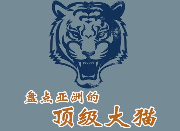 盘点亚洲的顶级大猫